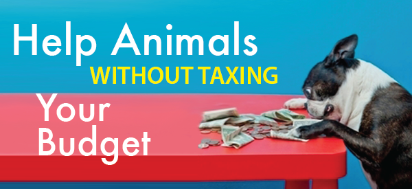 Help Animals Without Taxing Your Budget