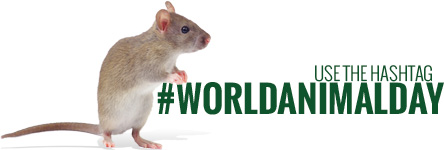 Use the hasthtag #worldanimalday