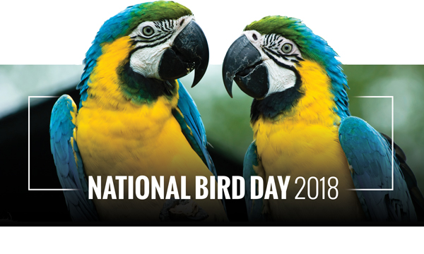 National Bird Day 2018