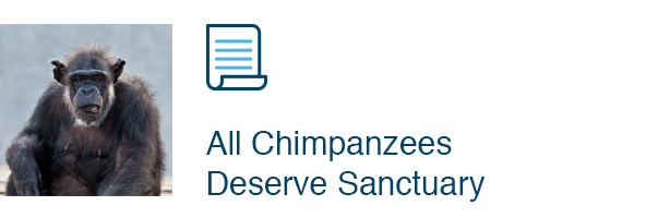 All Chimpanzees Deserve Sanctuary