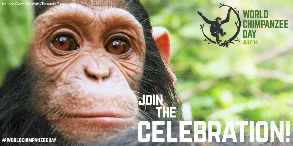 World Chimpanzee Day 2018