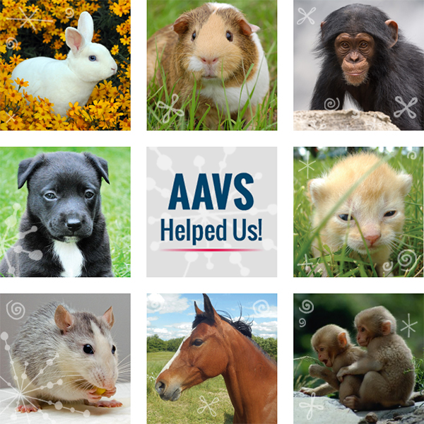 AAVS Helped Us!