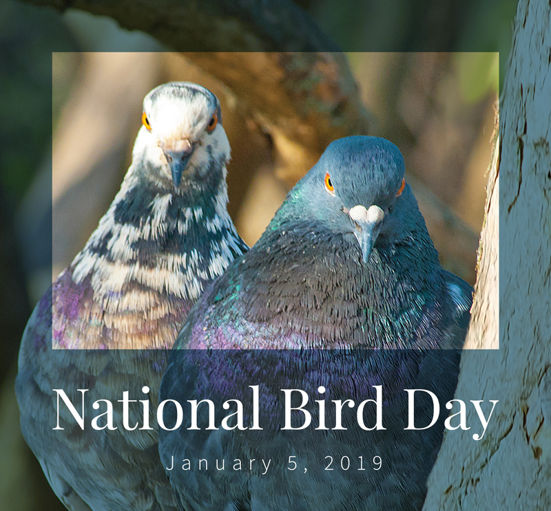National Bird Day 2019