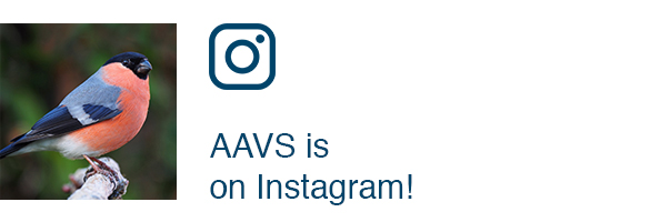 AAVS is on Instagram!
