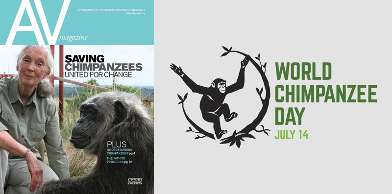 World Chimpanzee Day 2019