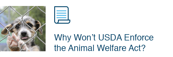 Why Won't USDA Enforce the Animal Welfare Act?