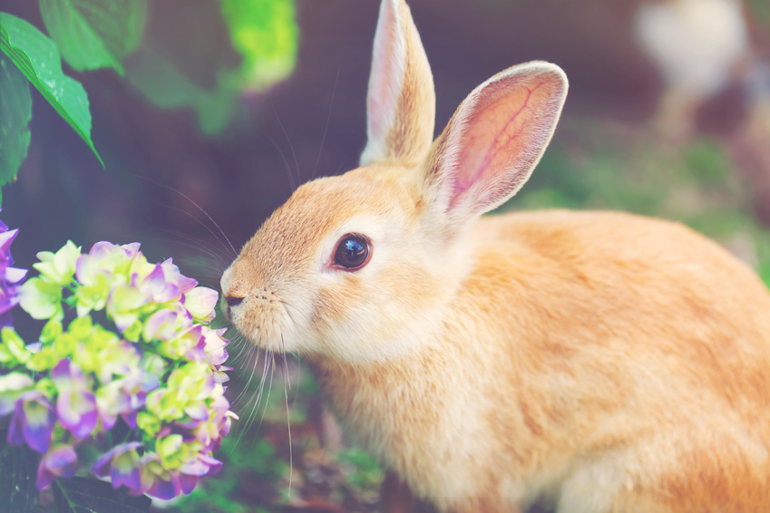 Closing in on Cruelty-Free Cosmetics