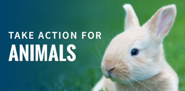 Take Action for Animals
