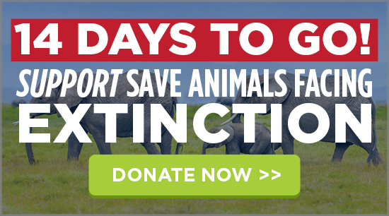 14 DAYS TO GO! Support Save Animals Facing Extinction