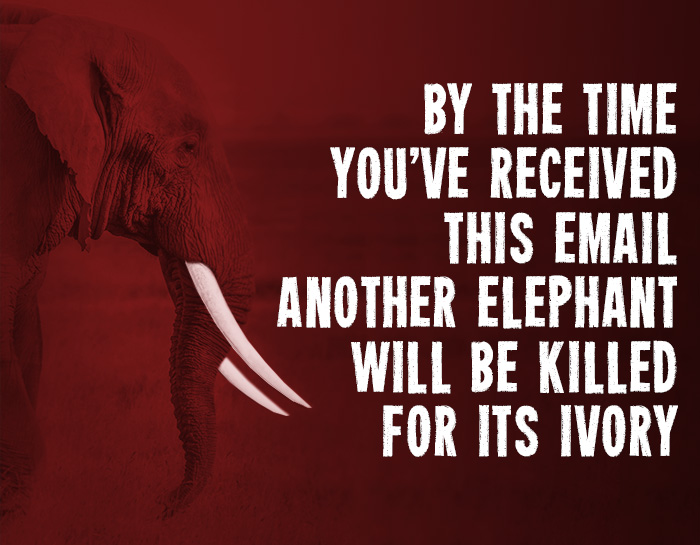 By the time you've received this email, another elephant will be killed for its ivory.