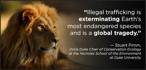"""""""Illegal trafficking is exterminating Earth's most endangered species and is a global tragedy."""" ~ Stuart Pimm, Doris Duke Chair of Conservation Ecology at the Nicholas School of the Environment at Duke University"""