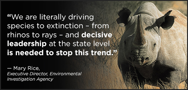"""""""We are literally driving species to extinction – from rhinos to rays – and decisive leadership at the state level is needed to stop this trend."""" ~ Mary Rice, Executive Director, Environmental Investigation Agency"""