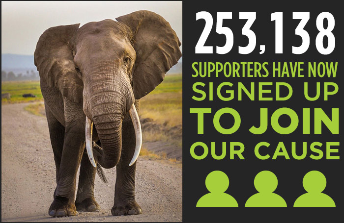 253,138 supporters have now signed up to join our cause