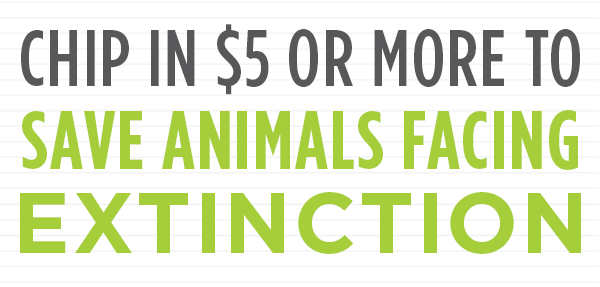 Chip in $5 or more to Save Animals Facing Extinction:
